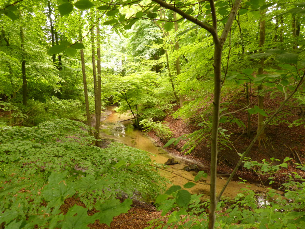 Luttercanyon in Quelle